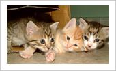 cuidar gatos recien nacido