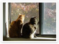 Comportamiento social entre gatos domesticos Social